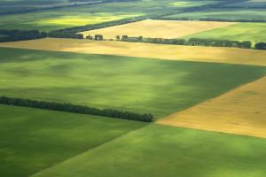 farm Feield cultivated