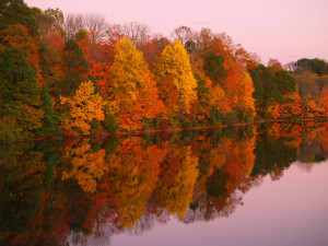 "Vivid Autumn foliage is reflected in a still lake in the golden hour, with periwinkle sky. Image created at Nockamixon State Park in Quakertown, Bucks County, Pennsylvania. ""Nockamixon"" may mean ""in the place or soft soil"" in the Lenni Lenape language. DSLR image at low ISO captures magnificent fall color warmth in a horizontal format late in the day. No people. Copy space."